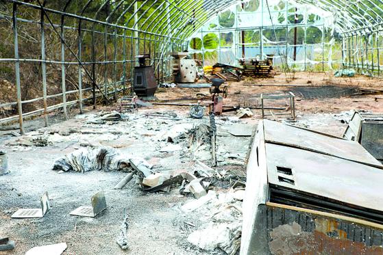 지난 2일 강원 고성 산불현장에서 날아온 '도깨비불'로 인해 피해를 입은 인근 비닐하우스가 앙상한 뼈대만 남아 있다. 뉴스1