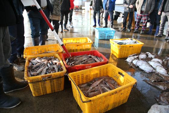 신종 코로나바이러스 감염증(코로나19)이 확산하는 가운데 지난 3월 경북 포항 죽도시장에 거래를 앞둔 오징어가 놓여 있다. 연합뉴스