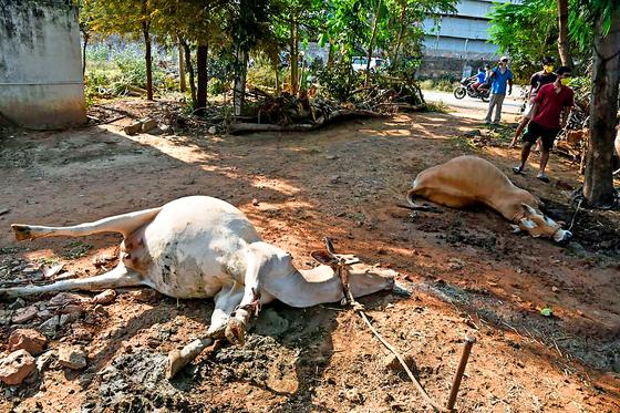 LG화학 인도공장에서 가스누출 사고로 동물들이 길거리에 쓰러져 있다. AFP=연합뉴스