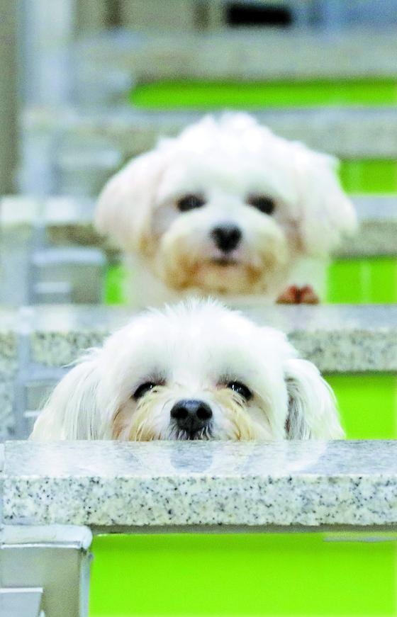 경기도 화성시의 한 동물보호센터에서 유기견들이 주인을 기다리고 있는 모습. 뉴스1
