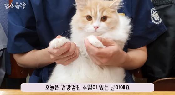수의대생 유튜버 A씨의 채널인 갑수목장 방송 화면. A씨는 펫샵에서 산 고양이를 유기묘로 둔갑했다는 의혹을 받고 있다. [유튜브 캡처]