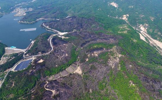 강원 고성군 토성면 산불 주불이 진화된 지난 2일 오전 화재 현장의 산림이 검게 타 있다. 연합뉴스