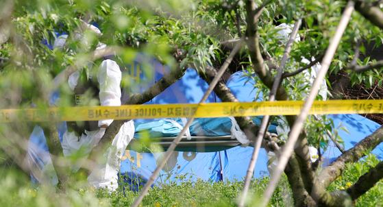 지난 12일 오후 전북 완주군 상관면 한 과수원에서 지난달 18일 전주 한옥마을 부근에서 실종된 20대 부산 여성의 숨진 채 발견돼 경찰이 시신을 옮기고 있다. 뉴스1