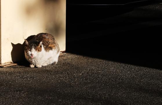 고양이(위 사진은 기사 내용과 관련 없습니다). 뉴스1