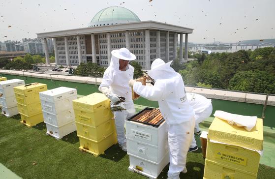 21일 국회도서관 옥상에서 열린 아카시아 꿀 채밀 행사에서 안상규벌꿀연구소 직원들이 채밀 작업을 하고 있다. 연합뉴스