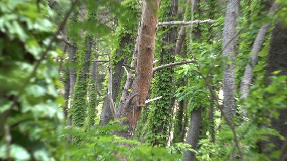 지난 3월 13일 고양이가 목매달려 죽은 채 발견된 경북 포항시 한동대 기숙사 주변 나무. 최근 서울의 한 방송사가 촬영을 위해 베어 내 현재는 사건 현장이 남아있지 않다. 공성룡