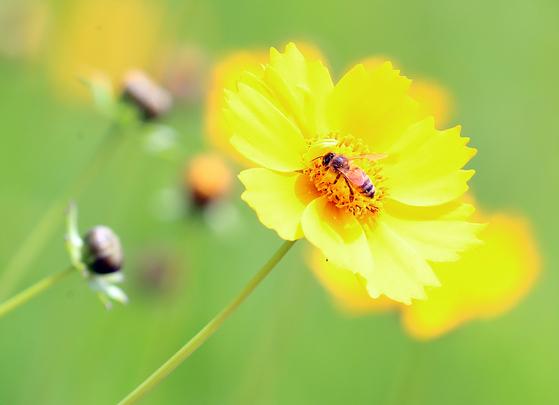 꿀벌은 세계 식물 식량자원 생산의 대부분을 매개하는 중요한 존재다. UN은 2017년부터 개체수가 줄어드는 꿀벌 보호를 위해 '세계 꿀벌의 날(Wolrd Bee Day)'를 제정해 꿀벌 보호에 나서고 있다. 연합뉴스