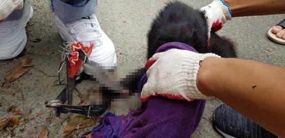 지난해 8월 5일 경북 포항시 한동대학교 주변에서 덫에 걸린 채 발견된 고양이. 누군가 놓아 둔 쥐덫에 앞발이 잘리는 부상을 입었다. 동물보호 동아리 '한동냥' 제공