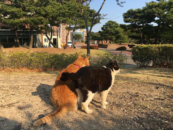 한동대학교 캠퍼스에서 쉬고 있는 고양이들. 지난해 30여마리에 달했던 고양이 수는 지속적인 중성화 사업 등을 통해서 10여마리까지 줄었다. 동물보호 동아리 '한동냥' 제공