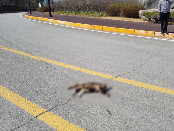 지난 3월 15일 경북 포항시의 한동대학교 통학로에 고양이 사체가 놓여있다. 무언가에 눌려 죽은 것으로 추정된다. 동물보호 동아리 '한동냥'