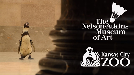 넬슨-앳킨스 미술관에 나타난 펭귄. 사진 넬슨-앳킨스 미술관 유튜브 채널 캡처