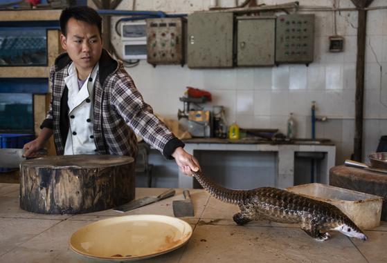 중국 광저우 교외의 한 식당에서 한 남성이 요리를 위해 천산갑을 도축하려는 모습. 이 식당에서는 천산갑 고기를 kg당 46만 원에 판매했다. AP=연합뉴스