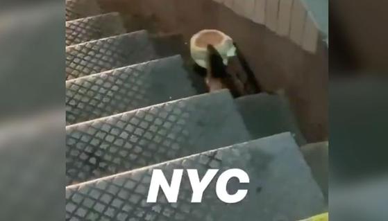 미국 뉴욕에서 발견된 쥐. 맥도날드의 에그머핀을 물고 계단을 내려가는 모습이 지난 3월 트위터를 통해 공개돼 화제가 됐다. [트위터]