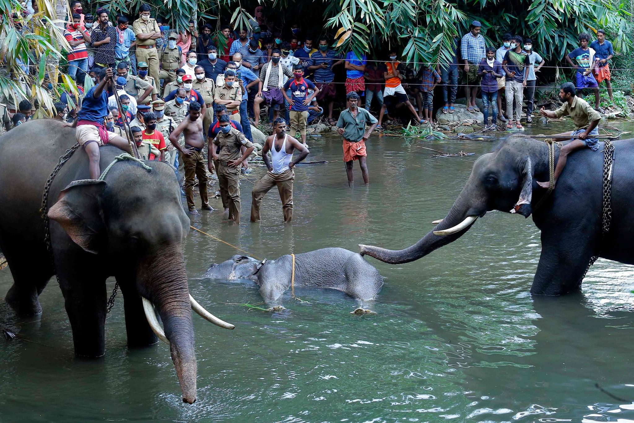 지난달 27일 인도 남부 케랄라 팔라카드 지역의 벨리야르 강에서 숨진 야생코끼리 한 마리와 이를 지켜보는 경찰과 구경꾼들 모습. AFP=연합뉴스