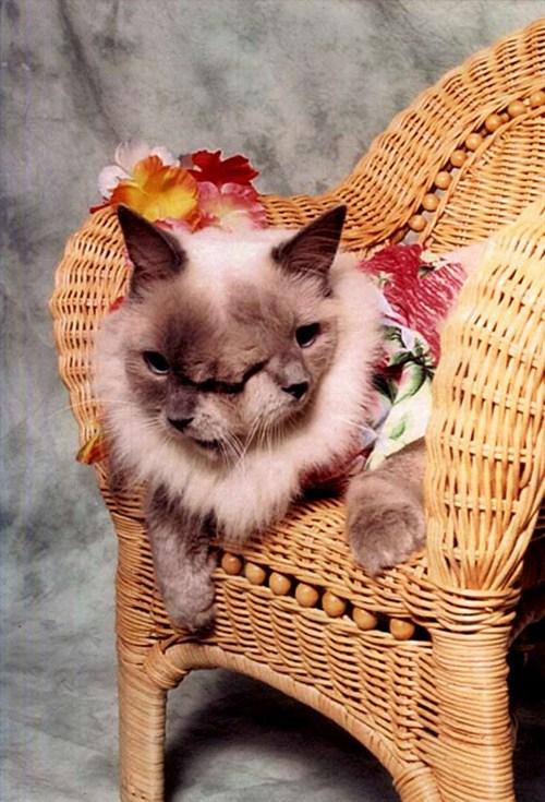 야누스 고양이 프랭크와 루이. 사진 Guinness World Records