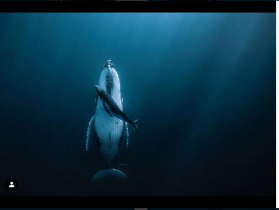 함단국제사진공모전에서 최우수상을 수상한 재스민 캐리 사진 작가의 사진. 자고 있는 어미 흑동고래 옆에 생후 2개월인 새끼 고래가 헤엄치고 있다. [재스민 캐리 인스타그램 캡처]