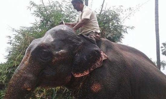 자신이 기르는 코끼리에 8억원 상당의 유산을 남기기로 한 인도 남성 아크타르 이맘. AFP=연합뉴스