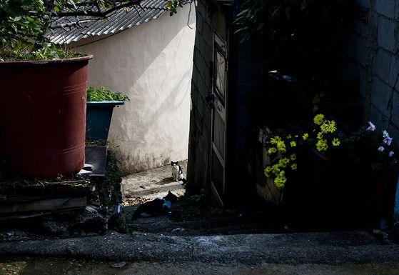 사진1. 빛과어둠, 2011/ 50mm, f16, s1/250, ISO 200. [사진 주기중]