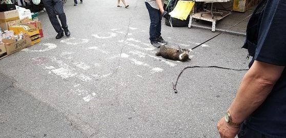 서울 동묘시장의 한 상인이 길고양이를 학대하는 정황이 담긴 사진이 인터넷에 확산돼 경찰이 내사에 착수했다. 연합뉴스