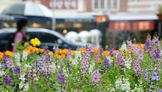 완연한 날씨와 함께 시원한 여름비가 내린 18일 전북 전주시 전주한옥마을 꽃밭 뒤로 관광객들이 길을 지나고 있다. 뉴시스