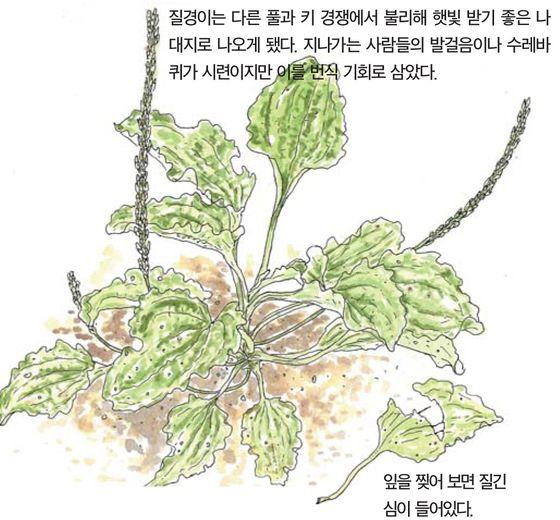 [소년중앙] 짓밟기 일쑤던 잡초, 알고 보니 잡초 아니네요
