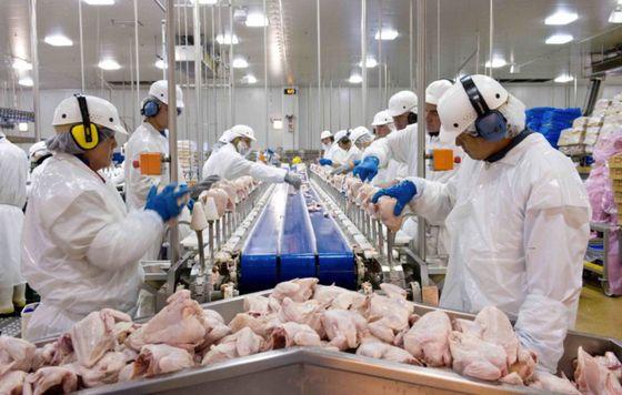 미국 최대 육류업체인 타이슨푸드에서 노동자들이 닭고기를 가공하고 있다. [중앙포토]