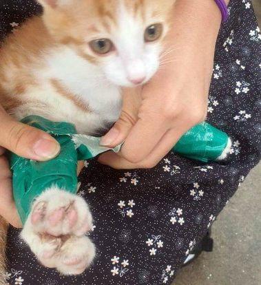 지난 24일 대전 동구 쓰레기 무단 투기 금지 구역에서 청테이프로 다리가 둘둘 묶인 채 발견된 새끼 고양이의 모습. 연합뉴스