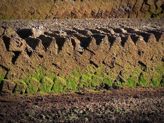 피트(Peat). 피트는 석탄이 되지 못한 식물퇴적층이다. [사진 Pixabay]
