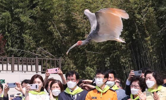 지난 5월 창녕군 우포따오기복원센터에서 따오기 40마리를 추가로 방사했다. 송봉근 기자