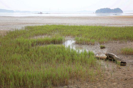 바람아래 해변 어귀. 갯벌 너머 보이는 작은 섬이 섬옷섬이고, 희미하게 보이는 포구가 옷점항이다. 고려 시대 비단 무역을 했던 장소다. 손민호 기자