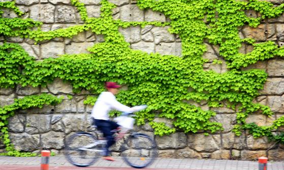 한 아파트 외벽에 초록의 담쟁이덩굴이 한창이다. 중앙포토