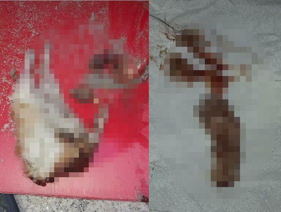 6일 오전 부산시 해운대의 한 아파트 지하주차장에서 발견된 고양이 사체. 연합뉴스
