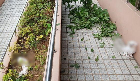 8일 경남 양산 한 아파트 9층 높이에서 주인이 던져 추락한 몰티즈 2마리. 연합뉴스