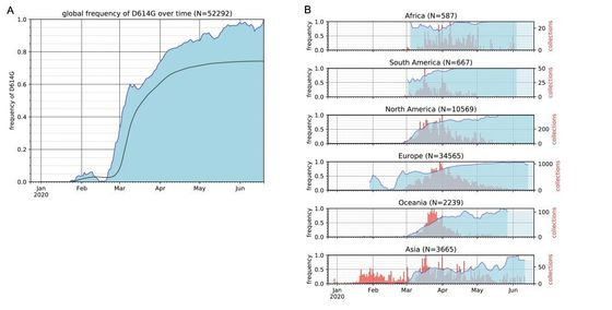 시간에 따른 코로나19 바이러스 변이 G 계열의 분포 변화. 왼쪽 A 그래프에서는 시간에 따라 하늘색으로 표시된 G 계열 변이의 비율이 증가하고 있다. 현재는 97% 이상을 차지한다. 실선은 누적 분포로 G 계열이 74%를 보이고 있다. 그림 B는 지역별로 나눠 본 것인데, 아시아 지역은 G 계열의 비율이 다른 곳에 비해 낮은 것을 알 수 있다.