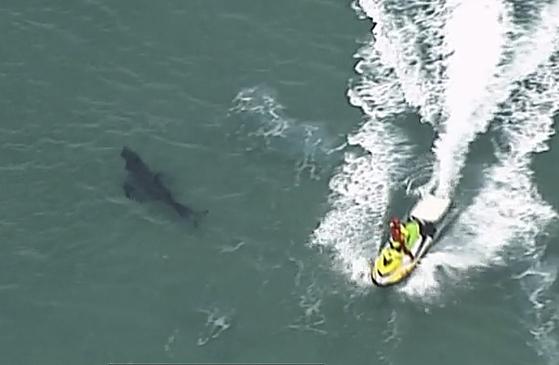 2020년 6월 7일, 호주 뉴사우스웨일스 킹스클리프 해안에서 포착된 상어. 최근 호주 해안에서 상어에게 공격을 받아 목숨을 잃는 사례가 이어지고 있다. [AP=연합뉴스]