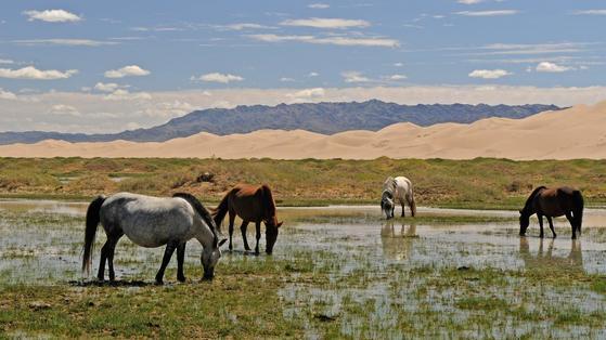 흉노, 돌궐, 몽골은 유라시아 대륙의 초원에서 말을 타고 활을 쏘며 질주했다. 그들은 끊임없이 중국을 침략하고 괴롭혀 만리장성을 쌓게 했다. [사진 pixabay]
