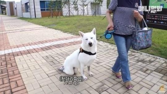 지난 1일 유튜브 채널 'TV동물농장x애니멀봐' 채널에 올라온 예고 영상. 장애를 가진 호돌이가 앉아있는 장면에 '뒷다리 파업'이라는 자막이 달렸다. [TV동물농장x애니멀봐 채널 캡쳐]