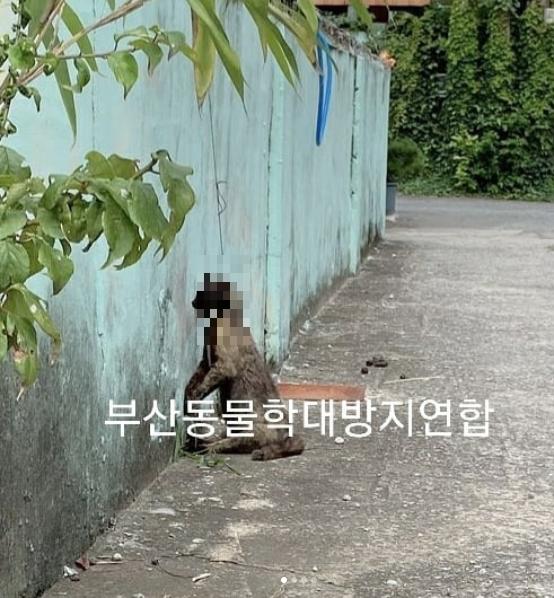 지난달 16일 부산 강서구 대저동 한 주택가에서 목이 묶인 고양이 사체가 발견됐다. [사진 부산동물학대방지연합]