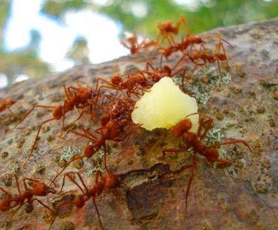 끝나지 않은 코로나 위기가 2차 쇼크로 나타날 때는 낭패를 볼 수 있습니다. 초보 개인개인투자자들이 붉은 개미로 승리하려면 몇가지 주의해야 합니다. [사진 pexels]