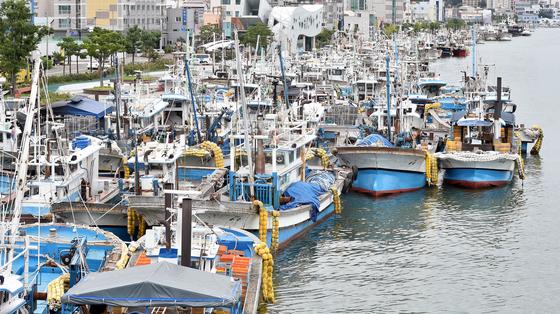 제5호 태풍 '장미'가 북상 중인 10일 오후 경북 포항시 북구 동빈내항에 서둘러 조업을 마친 어선들이 줄지어 정박해 있다. 뉴시스