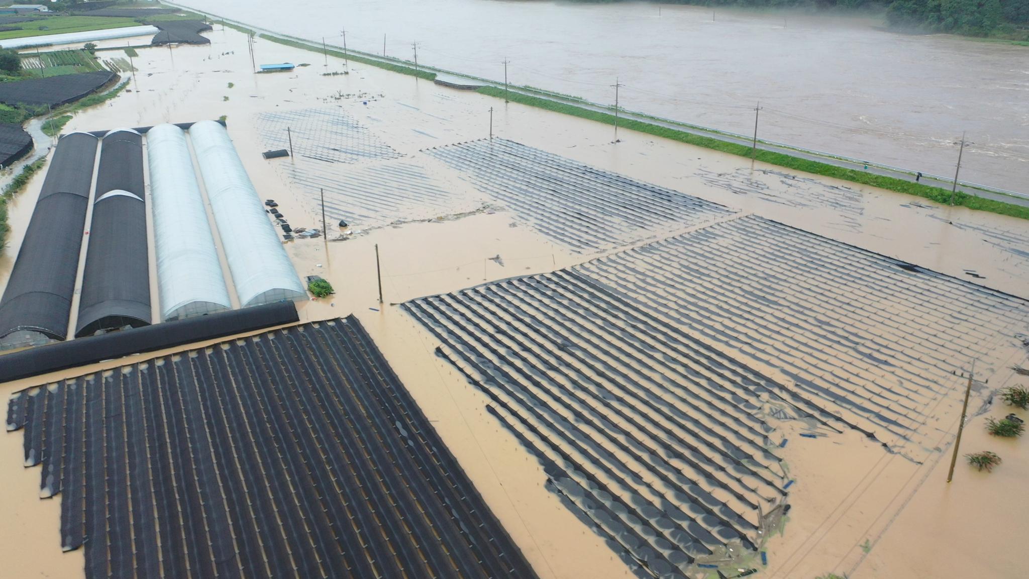 지난 8일 용담댐 방류로 침수 피해를 입은 충남 금산군 부리면 평촌리 인삼밭 모습. [사진 금산군]