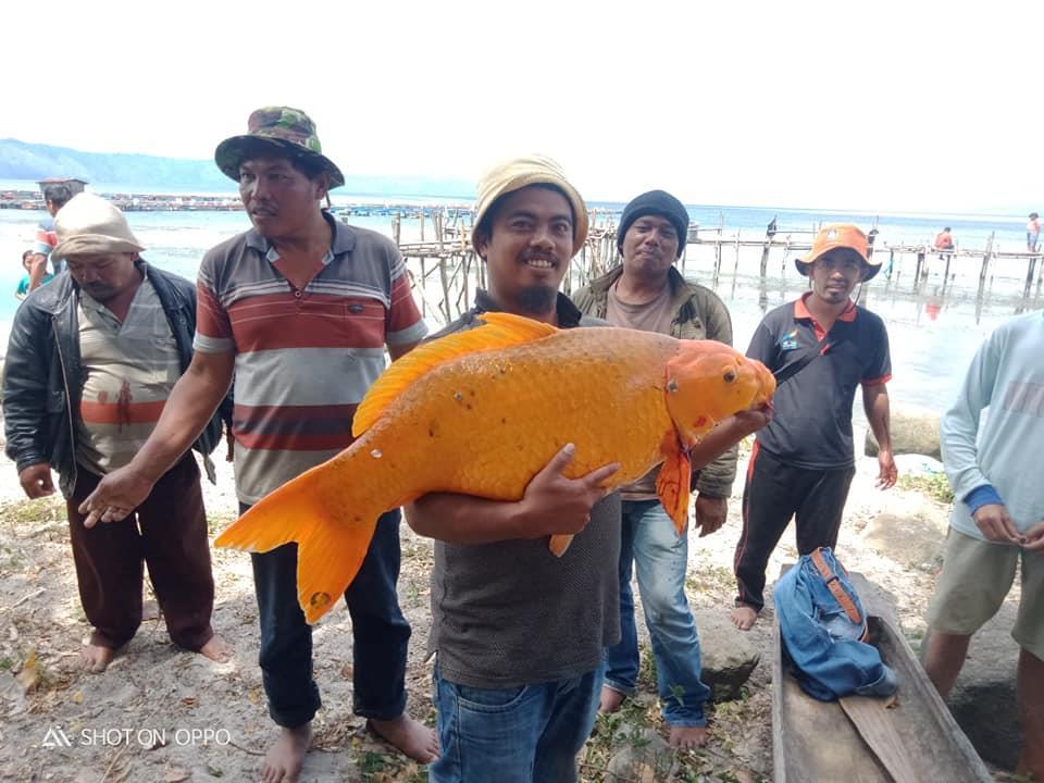 줄리아슨 사라기 일행이 호수에서 낚아 올린 15㎏ 거대 금붕어. 사진 페이스북 Juliarson Saragih