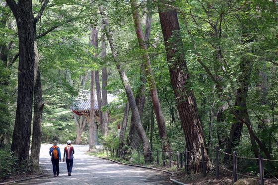 강원도 원주 치악산국립공원 구룡사 입구 쪽의 소나무 숲길. 9월 26일 황장목 숲길 걷기 축제가 열린다.