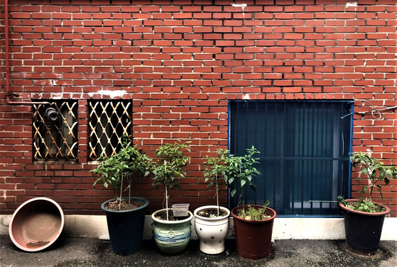존속살해 피의자 A씨가 어머니와 함께 살았던 서울 관악구 미성동의 한 다세대빌라. 오른쪽 아래가 A씨 방 창문이다. 문희철 기자
