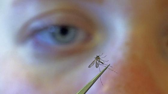 '쥬라기 공원'실험?  미국, 7 억 마리의 유전자 변형 모기 방출