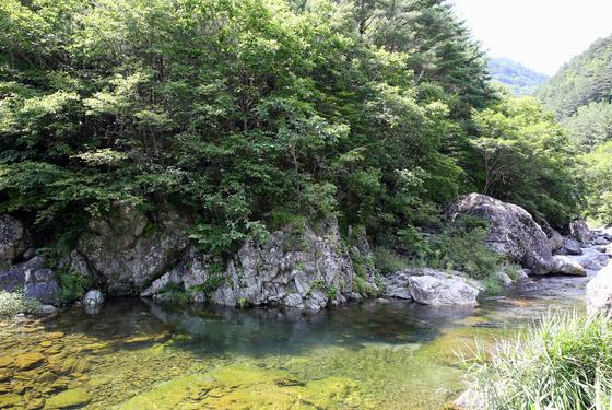 우리나라에서 가장 긴 지명 안돌이지돌이다래미한숨바우. 옛날엔 저 가파른 절벽에 매달려 다녔다고 한다.