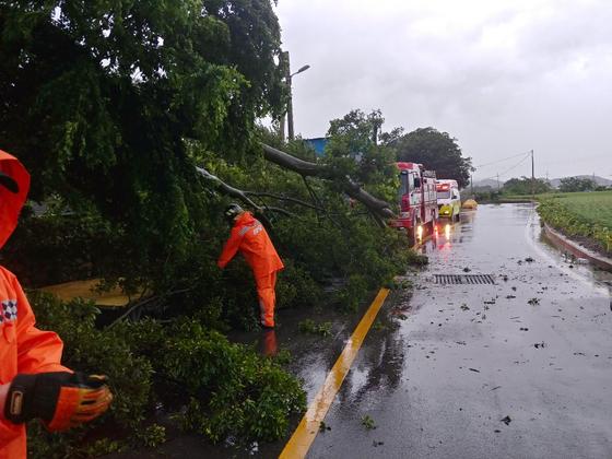 26일 제8호 태풍 바비의 영향으로 오후 5시 13분께 전남 영암군 학산면의 한 도로에서 나무가 쓰러져 소방대원들이 안전조치를 하고 있다. 사진 전남소방본부