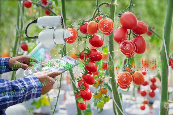 농장에 디지털 기술이 없었을 때 농부들은 자신의 경험만을 바탕으로 실시간으로 농장을 관리해야했습니다.  하지만 이제 클라우드 기술의 발달로 농부들은 빅 데이터를 기반으로 농장을보다 안정적으로 관리 할 수 있습니다. [셔터스톡]