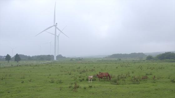 지난 4일 제주도 표선면 가시리목장에 위치한 가시리 풍력발전단지의 모습. 이 곳엔 소와 말 450마리가 살고있다. 최연수기자
