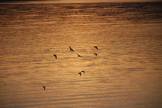 해가 질 무렵, 갈릴리 호수 위를 새들이 날고 있다. 갈릴리 호수는 바다라고 불릴만큼 넓다. 갈릴리=백성호 기자